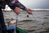 2016 Varnja kalalaat 275