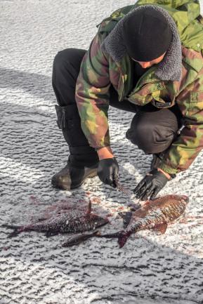 Kalagiid Marko puhastab värsket kala kalasupi jaoks.