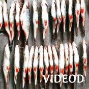 VIDEOD-2