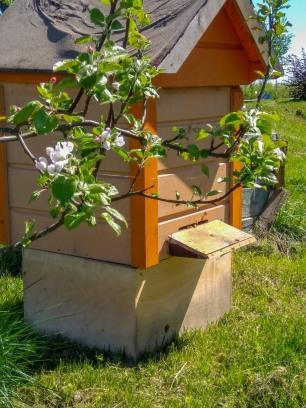 Mesi tares on oma mesitaru!