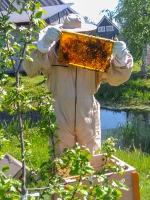 Mesi tare peremees uurib mesilaste käekäiku.