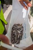 Varnja kalalaat 2018
