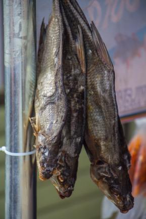 Varnja kalalaat 2018. Kalavalik kalalaadal.